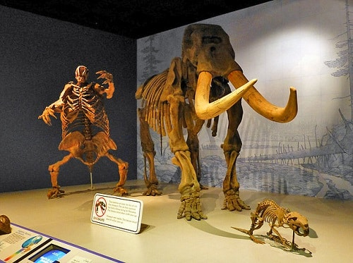 Musée d'Etat de l'Illinois - Springfield